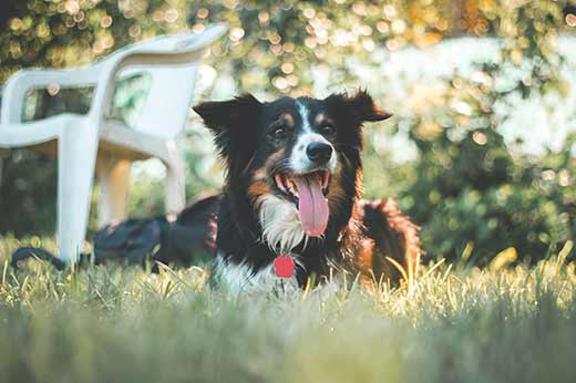 Can Essential oils be used on dogs or puppies?
